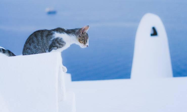 gatto che sta per saltare