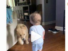 cane sorridere bambino video