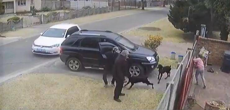 cane protegge padrone rapina
