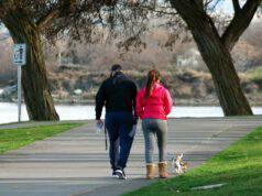 cane passeggia passeggiata camminare
