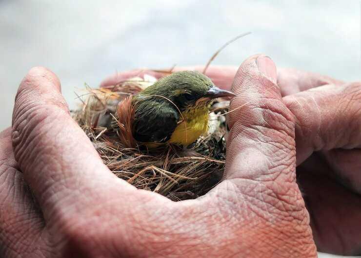 uccellino mano