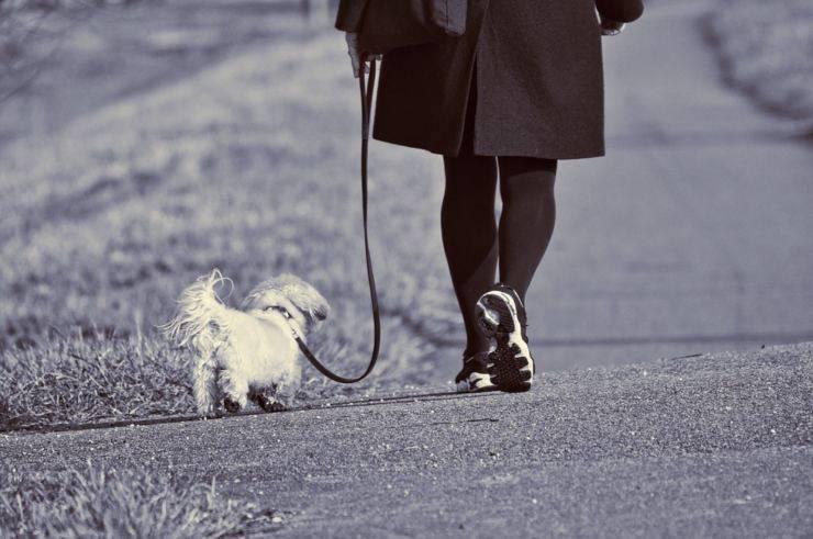 cane passeggia al guinzaglio