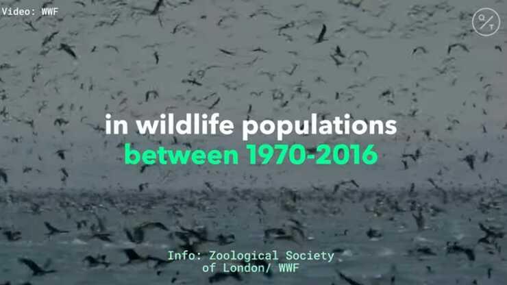 Negli ultimi 50 anni la popolazione del regno animale è diminuita del 70%