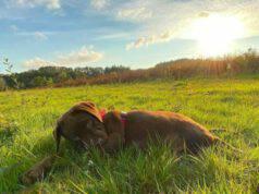 Un cagnolino rilassato (Foto Instagram)
