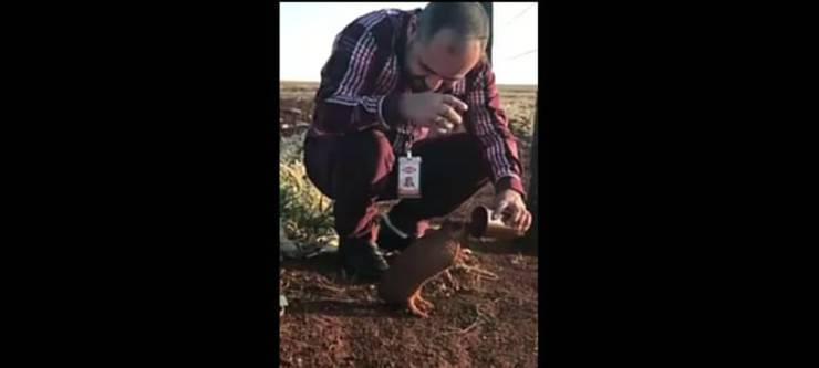 L'armadillo che ha sete (Foto video)