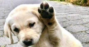 cane cucciolo alza zampa