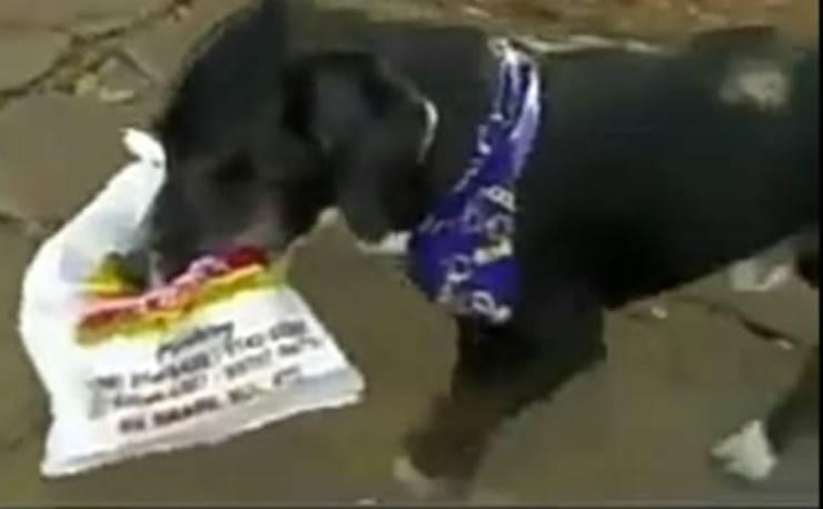 la cagnolina che porta il pane (Foto video)