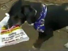 La cagnolina che compra il pane (Foto video)