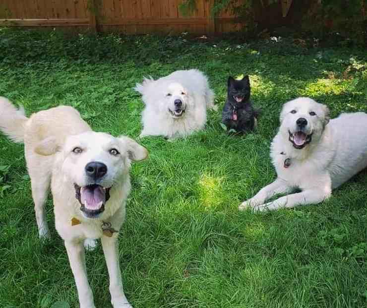 cane terrorizzato