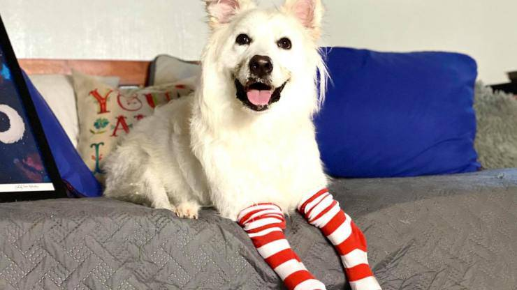 cane camminare protesi