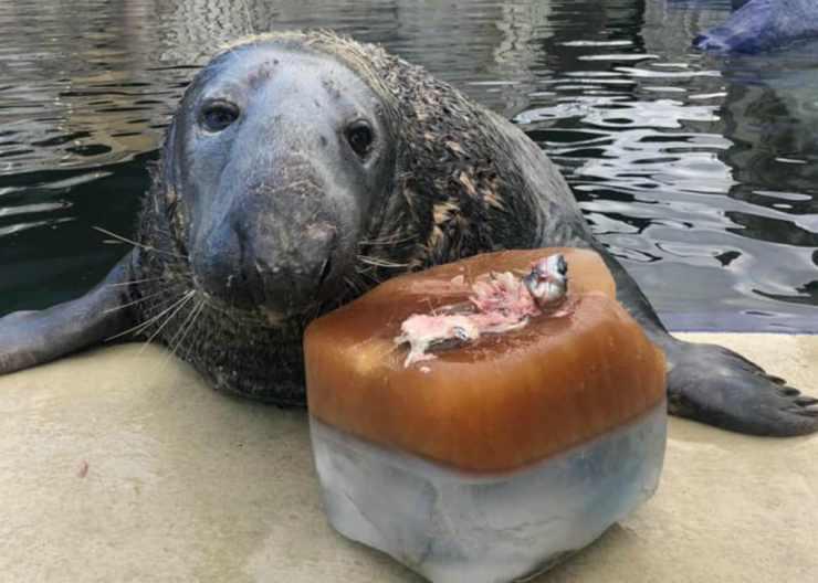 La foca emozionata (Foto Facebook)