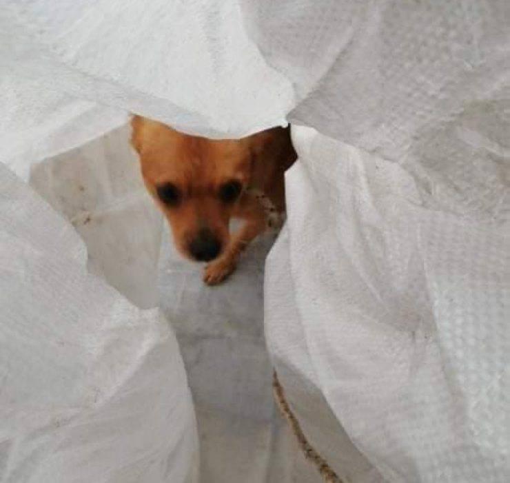 cane legato sacco gigio
