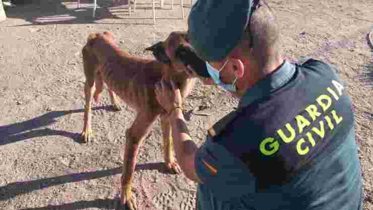 Il cane salvato dalla guardia civile (Foto Facebook)