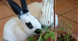 Conigli affamati (Foto Facebook)