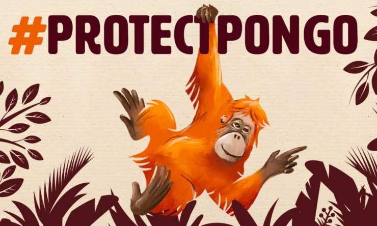 Protezione e tutela dell'orango (foto Facebook)