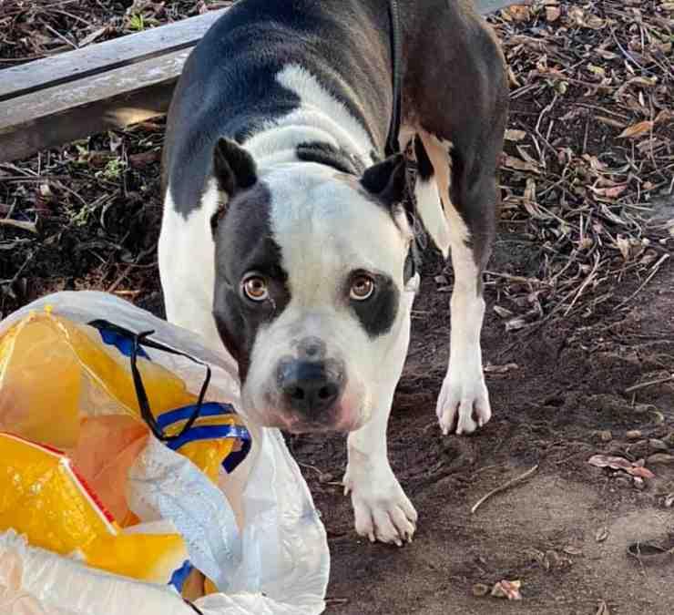 cane abbandonato legato panchina
