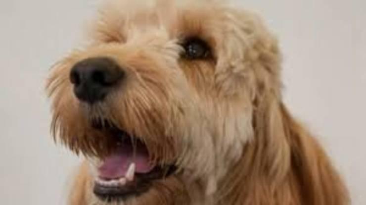 teddy cane salvato bambino asciugatrice