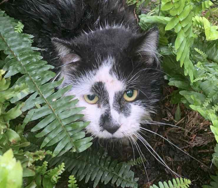 gatto ferito trappola illegale