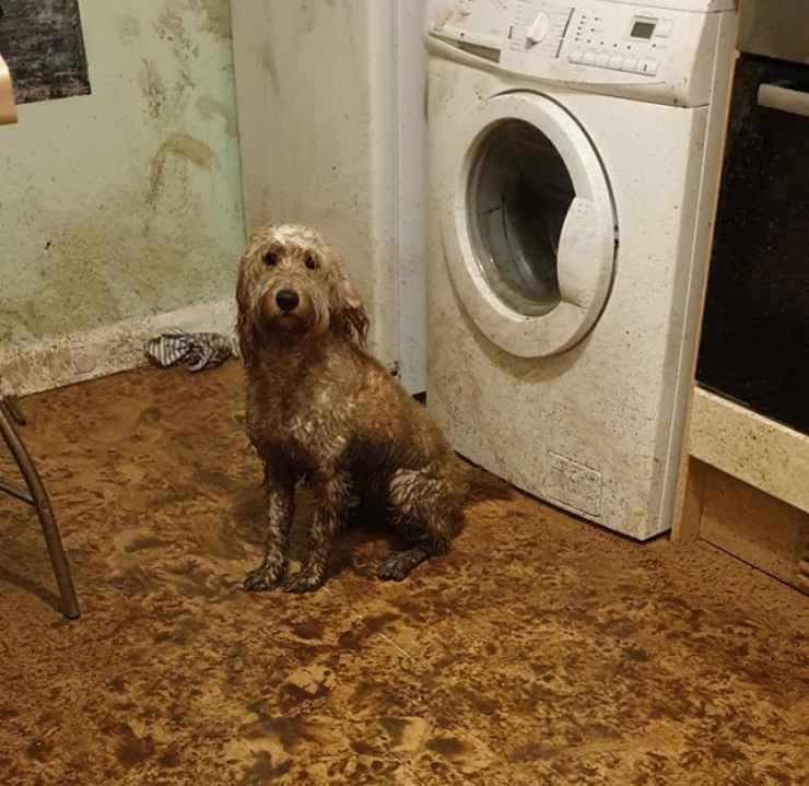 cane sporca cucina fango