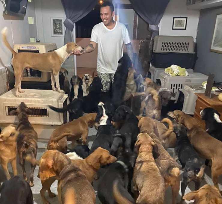300 cani randagi santuario