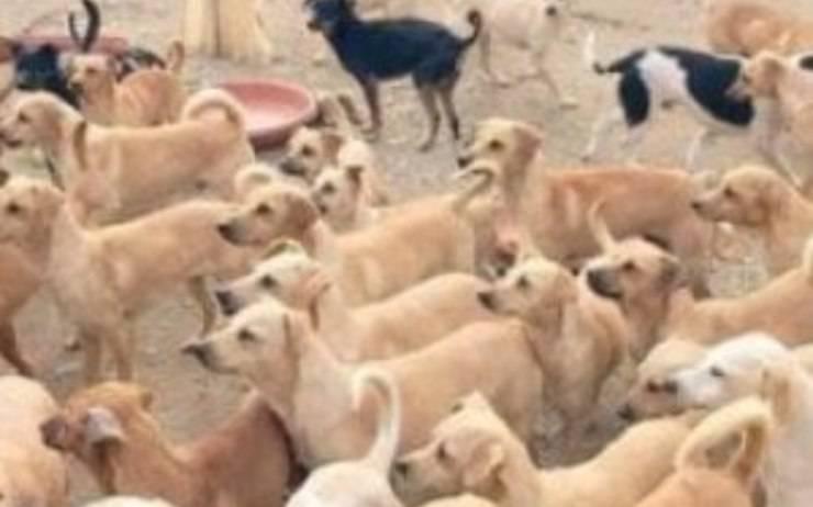 101 cani canile abusivo