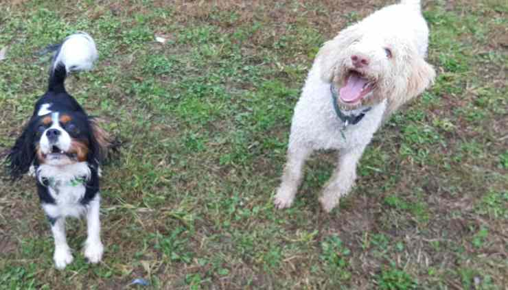Cani felici (Foto Facebook)