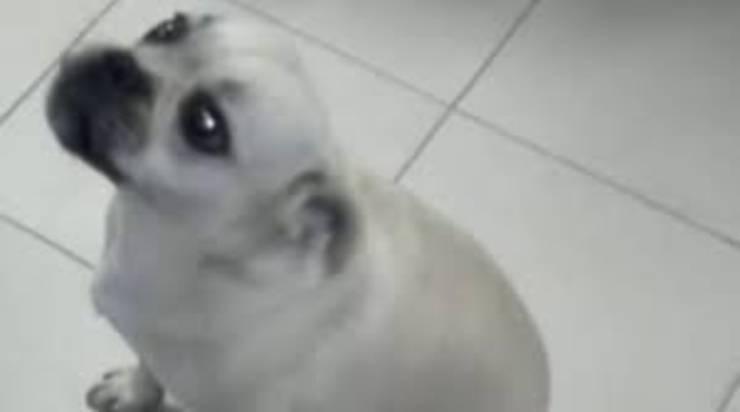 nocchia cane