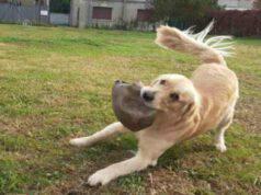 Il cane giocherellone (Foto Facebook)