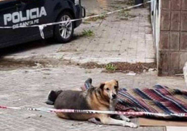cane capullo