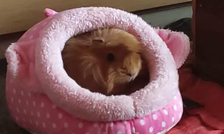 Coniglietto al caldo (Foto Facebook)