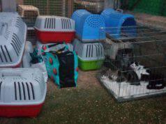30 gatti abbandonati