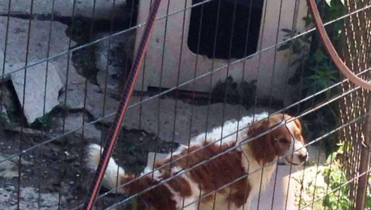 pensione abusiva cani