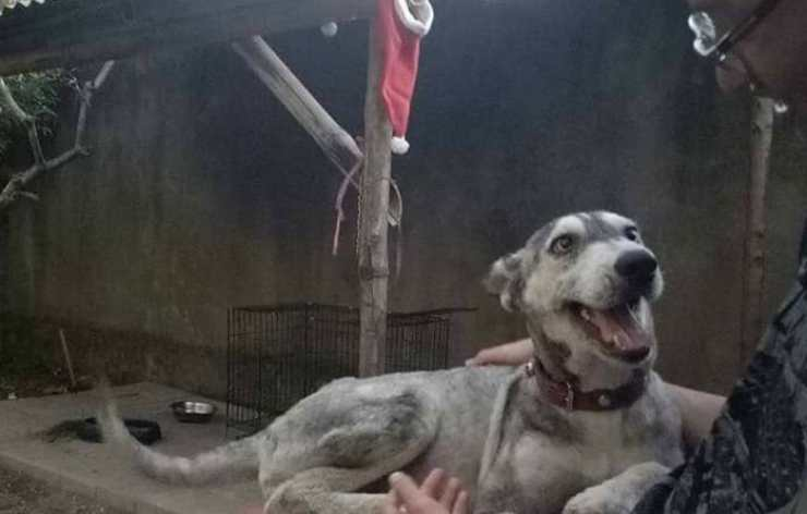 Il cane sorridente (Foto Facebook)