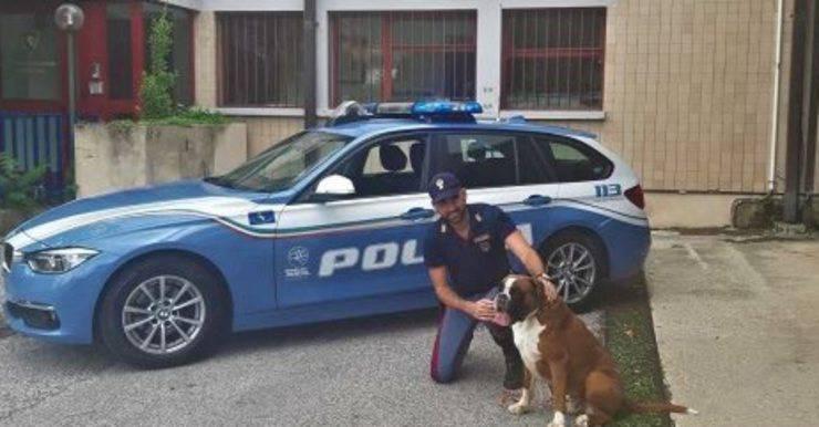 cane abbandonato autostrada polizia