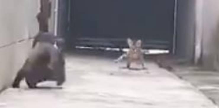 gatto volo gatti