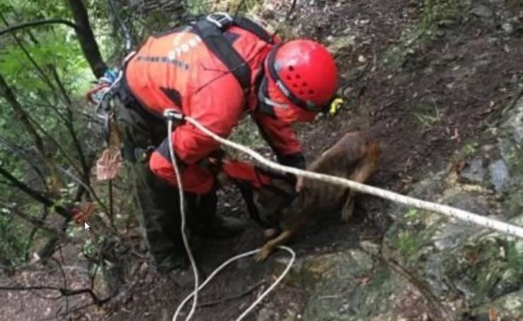 cane vigili del fuoco dirupo