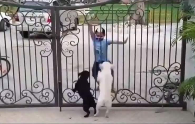 bambino balla due cani