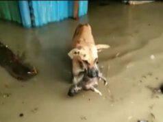 cane porta cucciolo sicuro