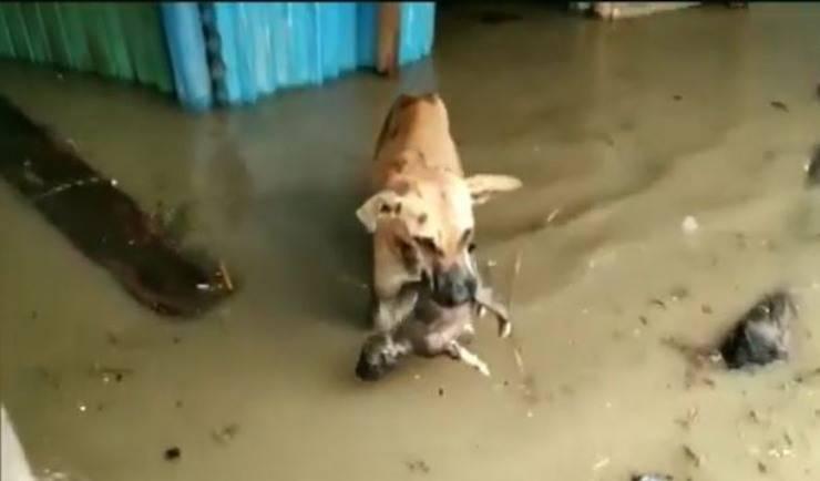 mamma cane porta cucciolo