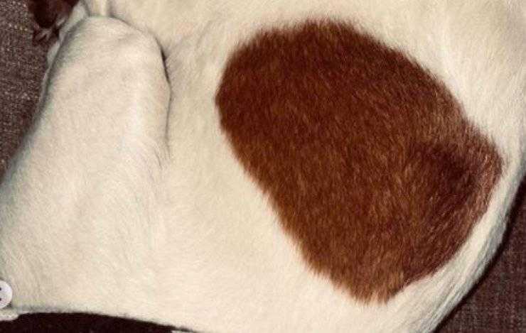 cane cecilia rodriguez