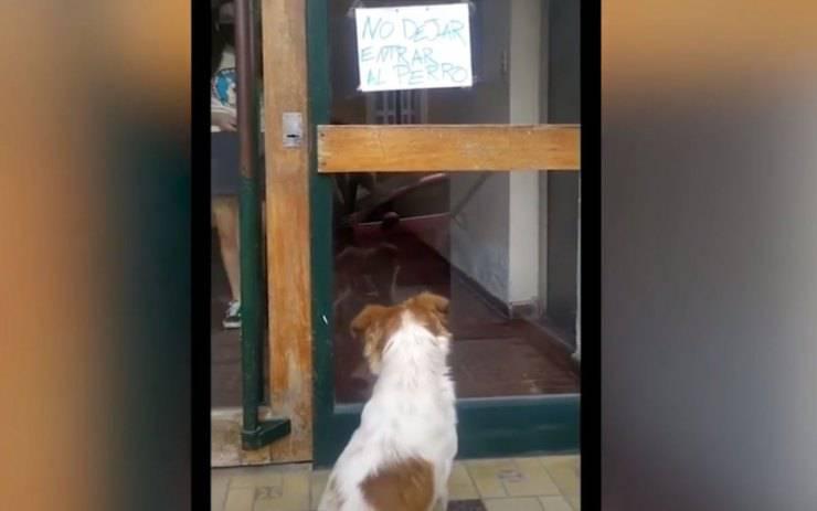 cane davanti porta condominio