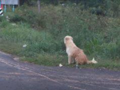 cane aspetta incrocio proprietari
