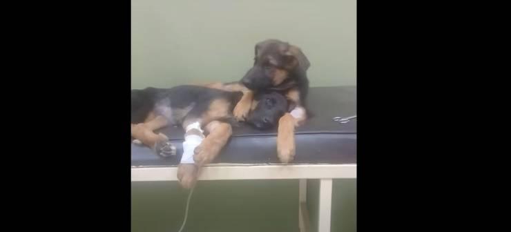 cagnolino abbraccia sorellina malata