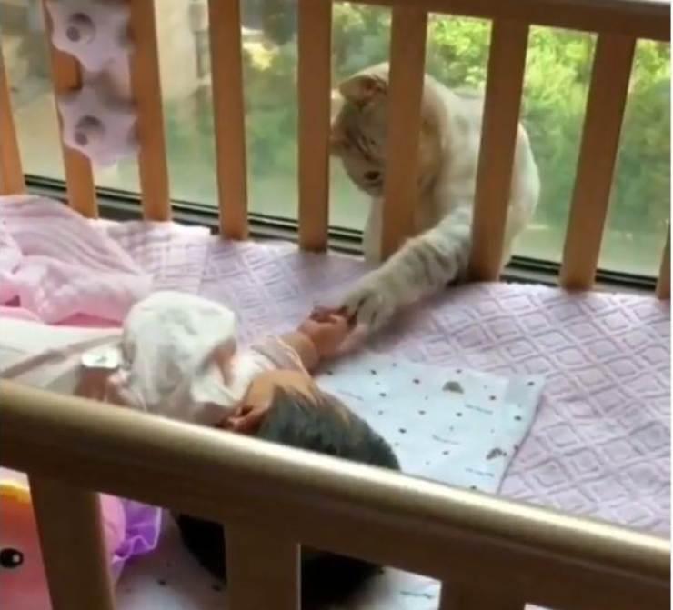 gatto accarezzare bambina neonata