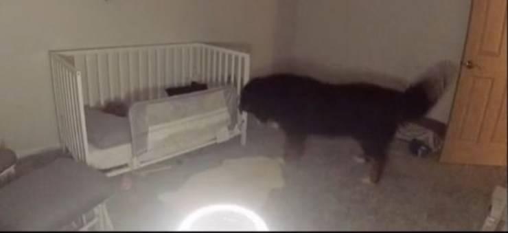 cane entra stanza bambina
