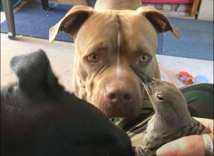 cane uccellino finestra