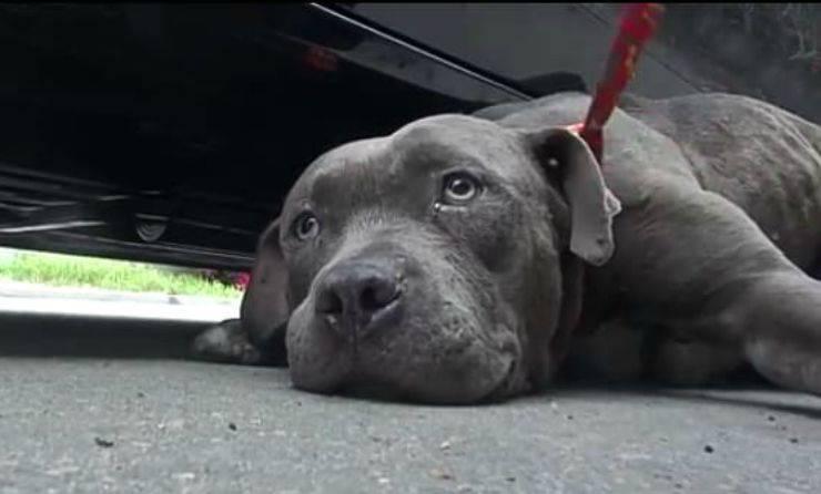 Il cane che ha paura delle auto (Foto video)