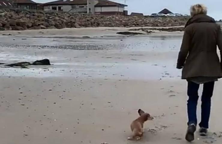 Il cane che insegue la padrona (Foto video)