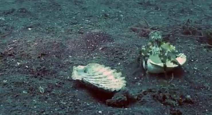 Il polipo liberato (Foto video)