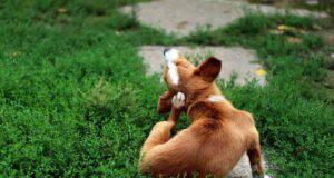 cane gratta prurito